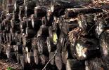 Abgelagerte Baumstämme