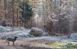 Wegegabelung im Wald
