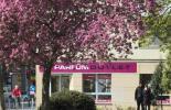 Ein rosa blühender baum vor einem rosa Ladenschild