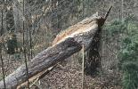 Aufgesplitterter Baumstamm