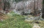Rauhreif liegt auf dem Wald