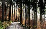 winterliche Sonne beleuchtet den Wald