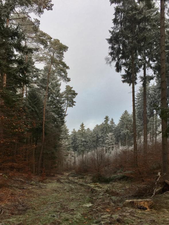 Wald bei Winterfrost