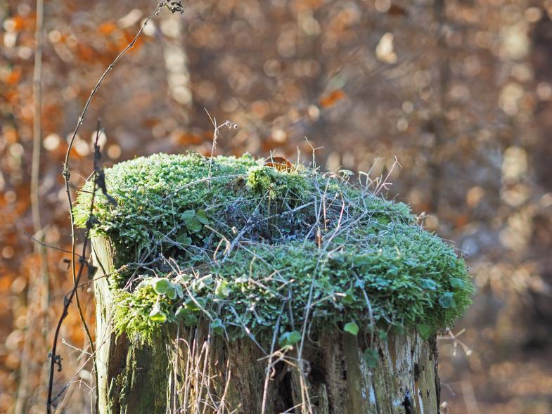 üppige Flora auf einem abgesägten Baumstamm