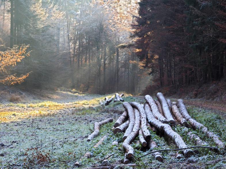 abgesägte Bäume auf einem Haufen