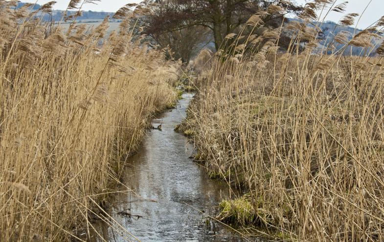 Bachlauf bei Heringen
