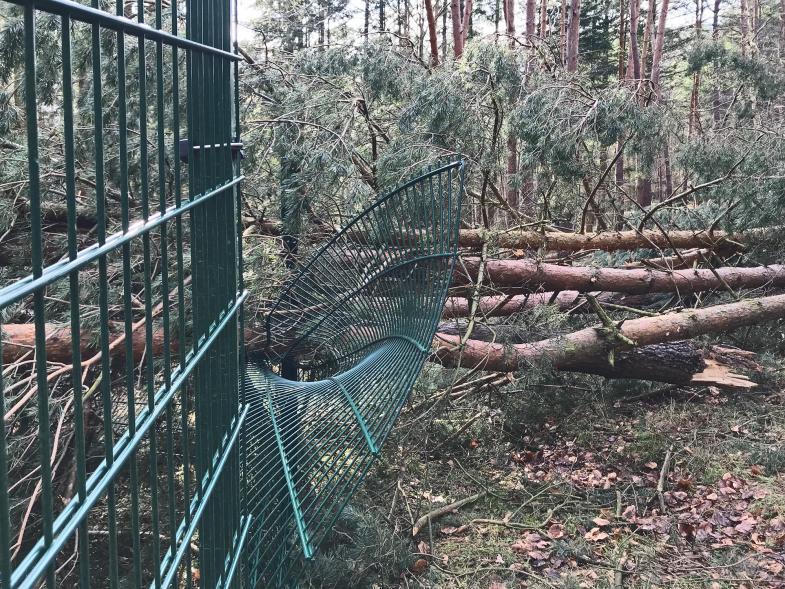 von stürzenden Bäumen verbogener Zaun