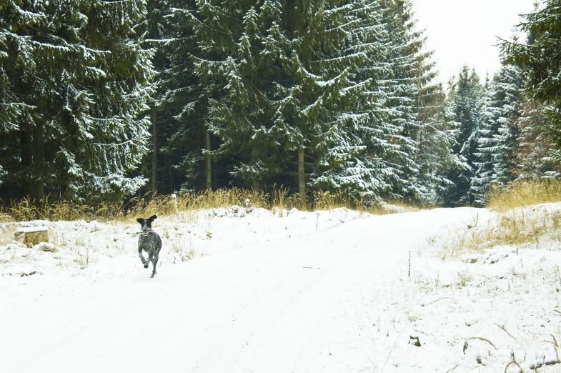 Charli rennt durch den Schnee