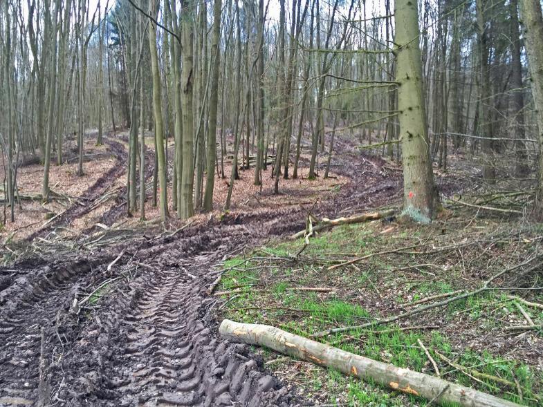 Folgen der Holzindustrie
