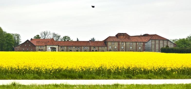 Ein langgestrecktes Gutgebäude hinter einem blühenden Rapsfeld