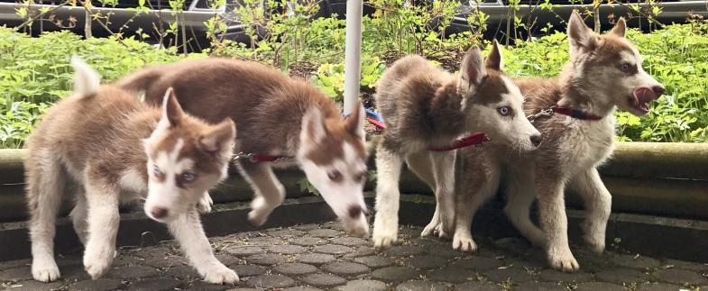 Vier sehr hübsche Hundekinder