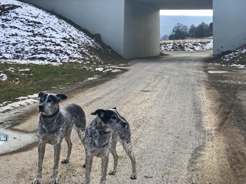 Zwei Hunde vor Unterführung