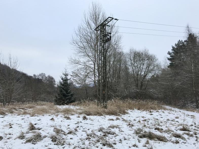 Stromtrasse verschwindet mitten im Wald im Boden