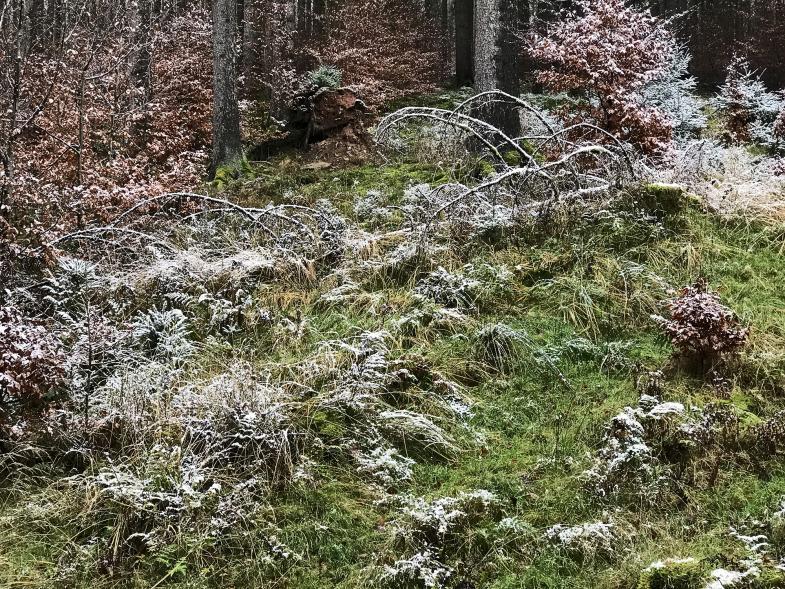 Raufreif auf dem Wald