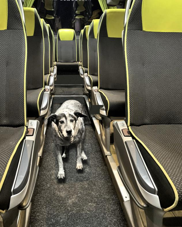 Dieses Bus-Ding war dem Hund nicht geheuer
