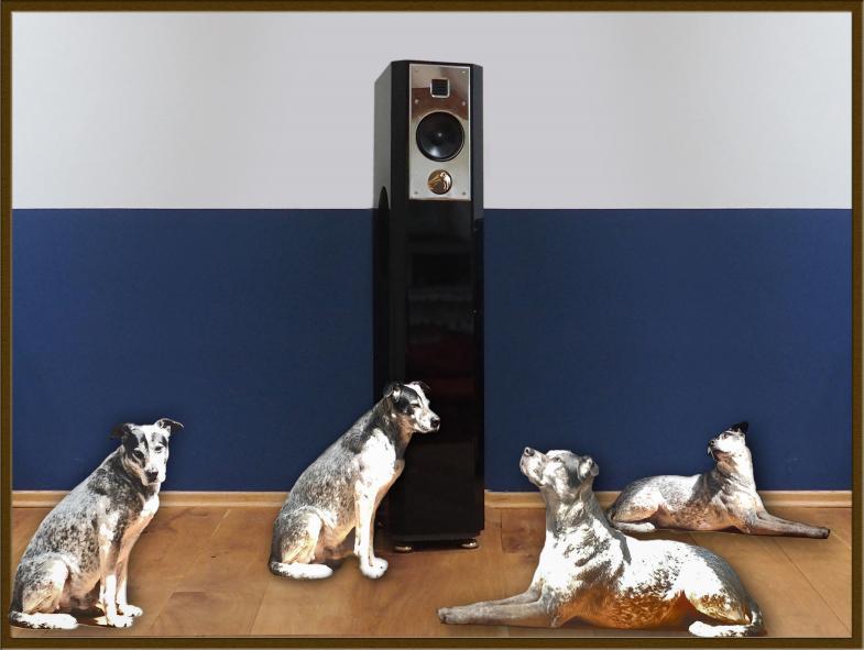 His Masters Voice - Hunde lauschen dem Lautsprecher