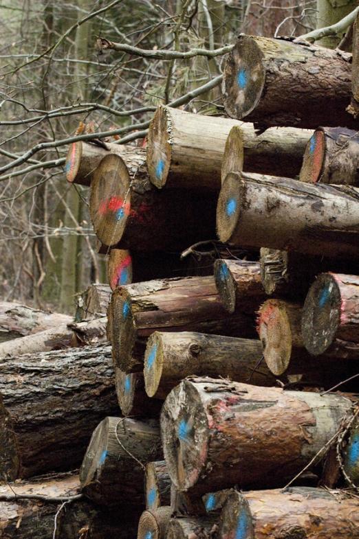 Holzeinschlag mit Sprühmarkierung