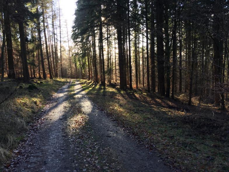 Ein Bild vom Wald mit Sonnenstrahlen
