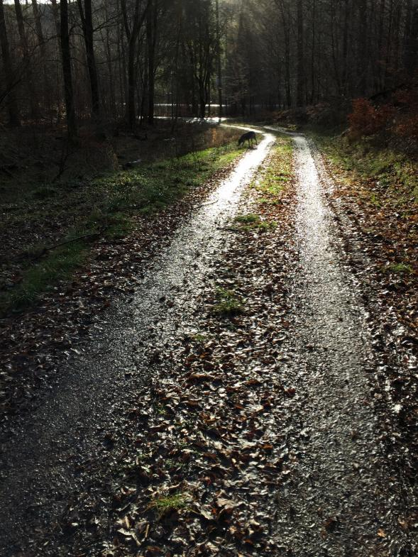 Ein nasser Waldweg reflektiert die Sonne