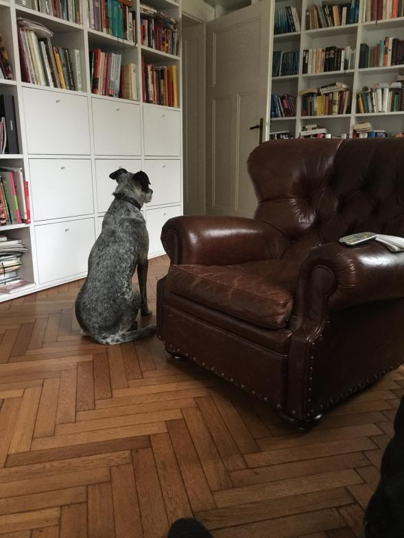 Hund betrachtet Bibliothek