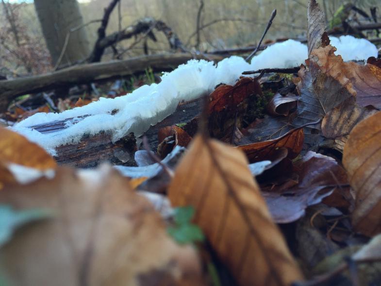 Laub mit Schneeresten