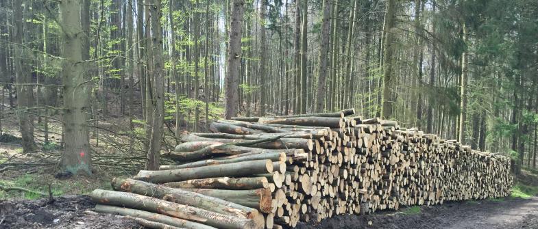 Ein 30 m langer Stapel von Baumstämmen