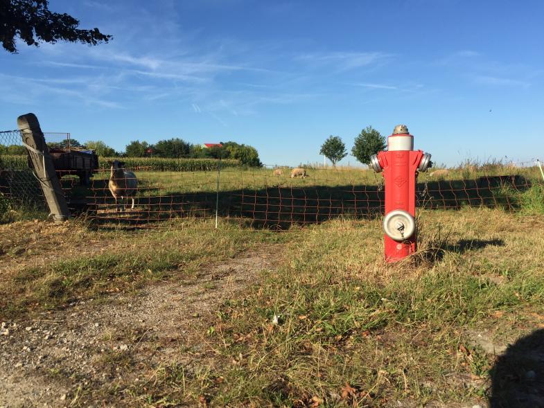 Ein Hydrant mitten in der Landschaft mit ein paar Schafen im Hintergrund
