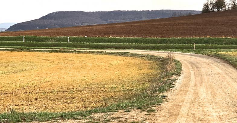Ein Feldweg