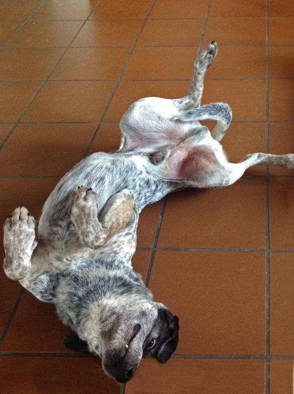 Hund auf dem Rücken