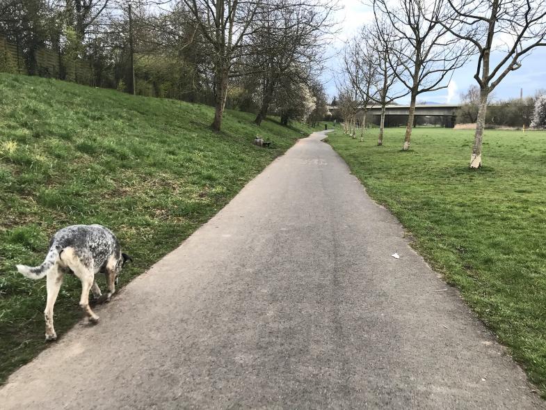 Hund schnüffelt am Wegesrand