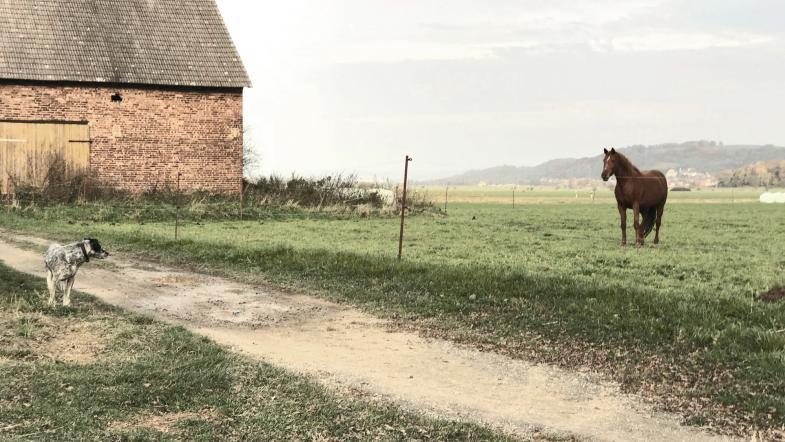 Hund sieht Pferd, oder umgekehrt
