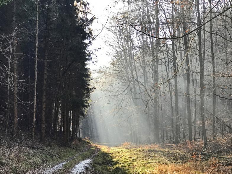 Sonnenstrahlen im Winterwald