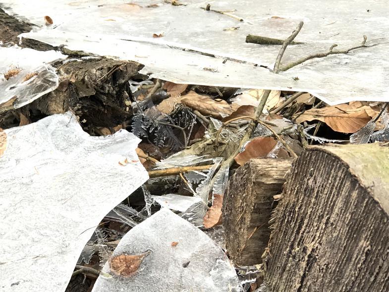 gebrochenes Eis auf einer Waldpfütze