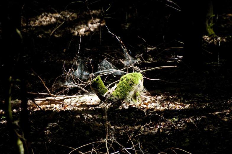 Bemoostes Holz im Unterholz