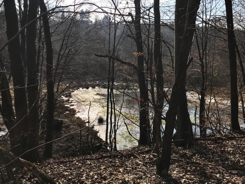 Ein Teich im Wald im Licht